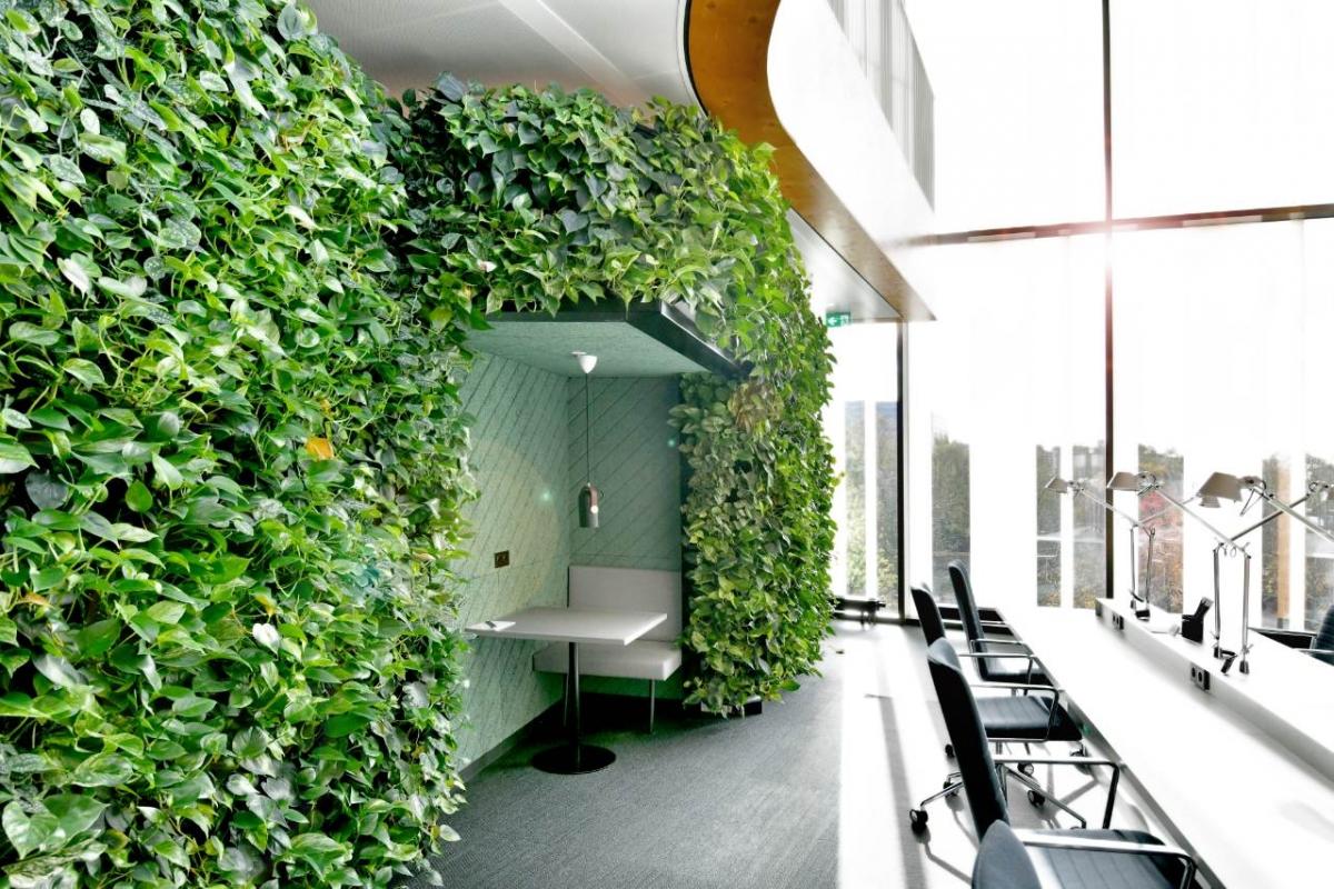 Ściana zielona